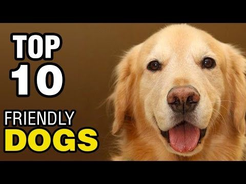 Video Friendly Dogs For You Http Www Pawsforpeeps Com P