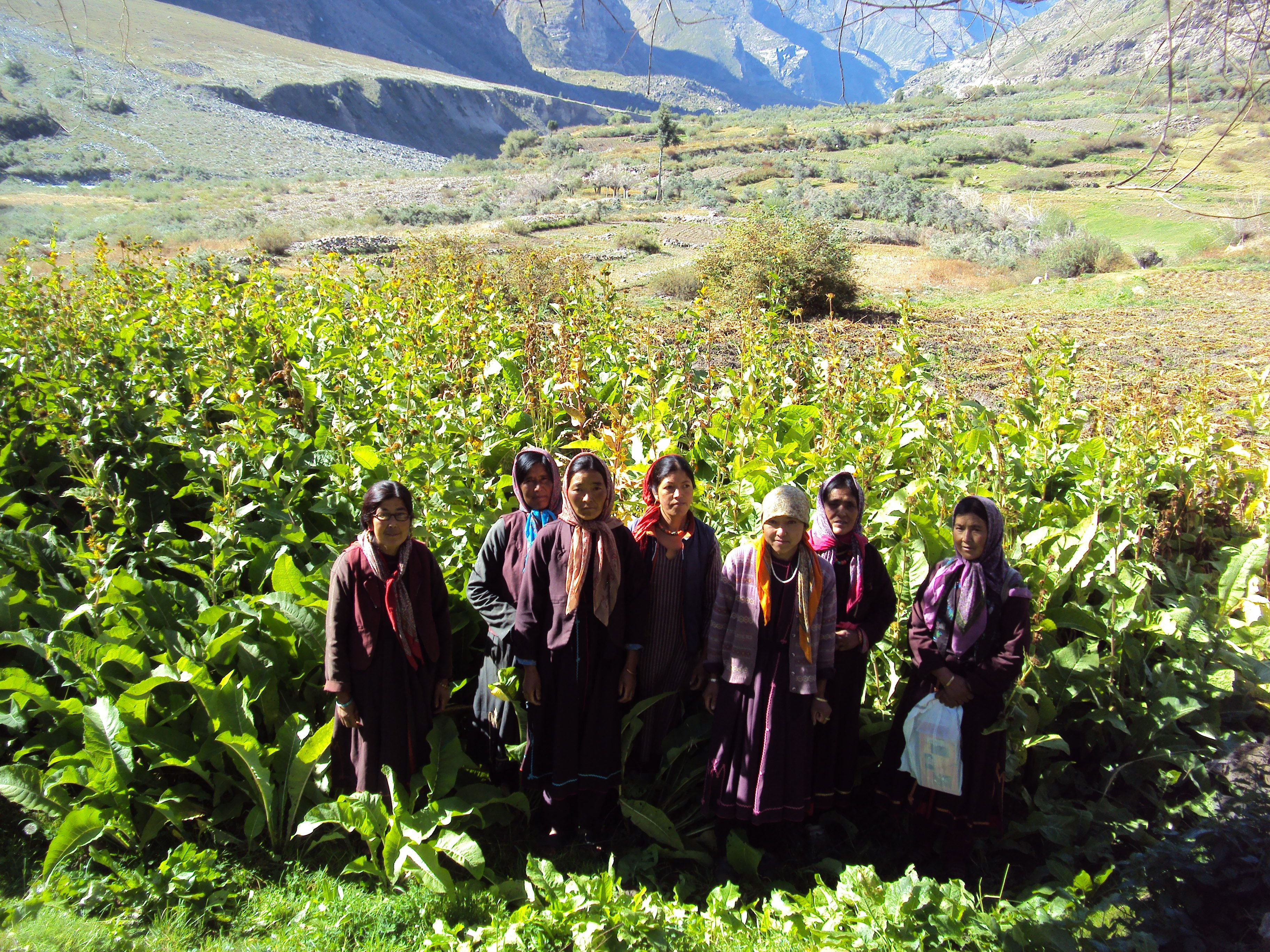 Women small farmer group cultivating medicinal plants in