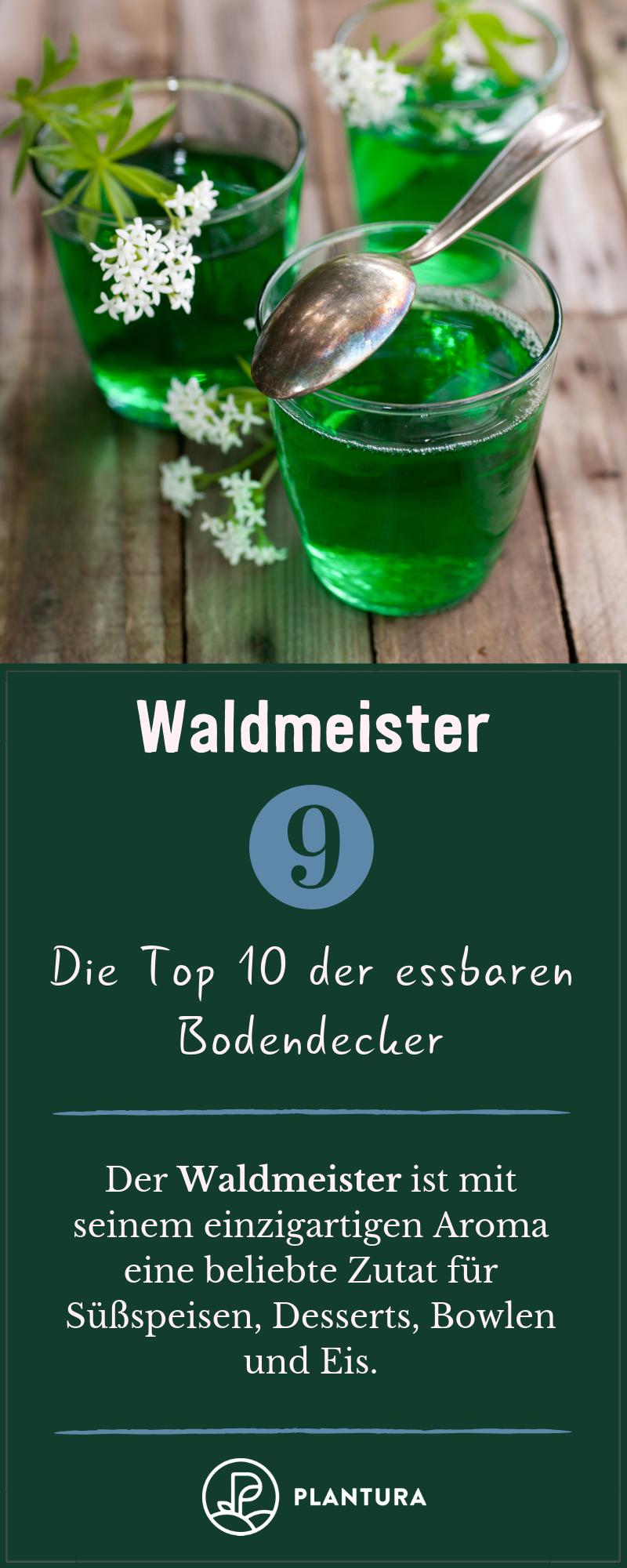 Essbare Bodendecker: Die Top 10 für Ihren Garten #hatflower