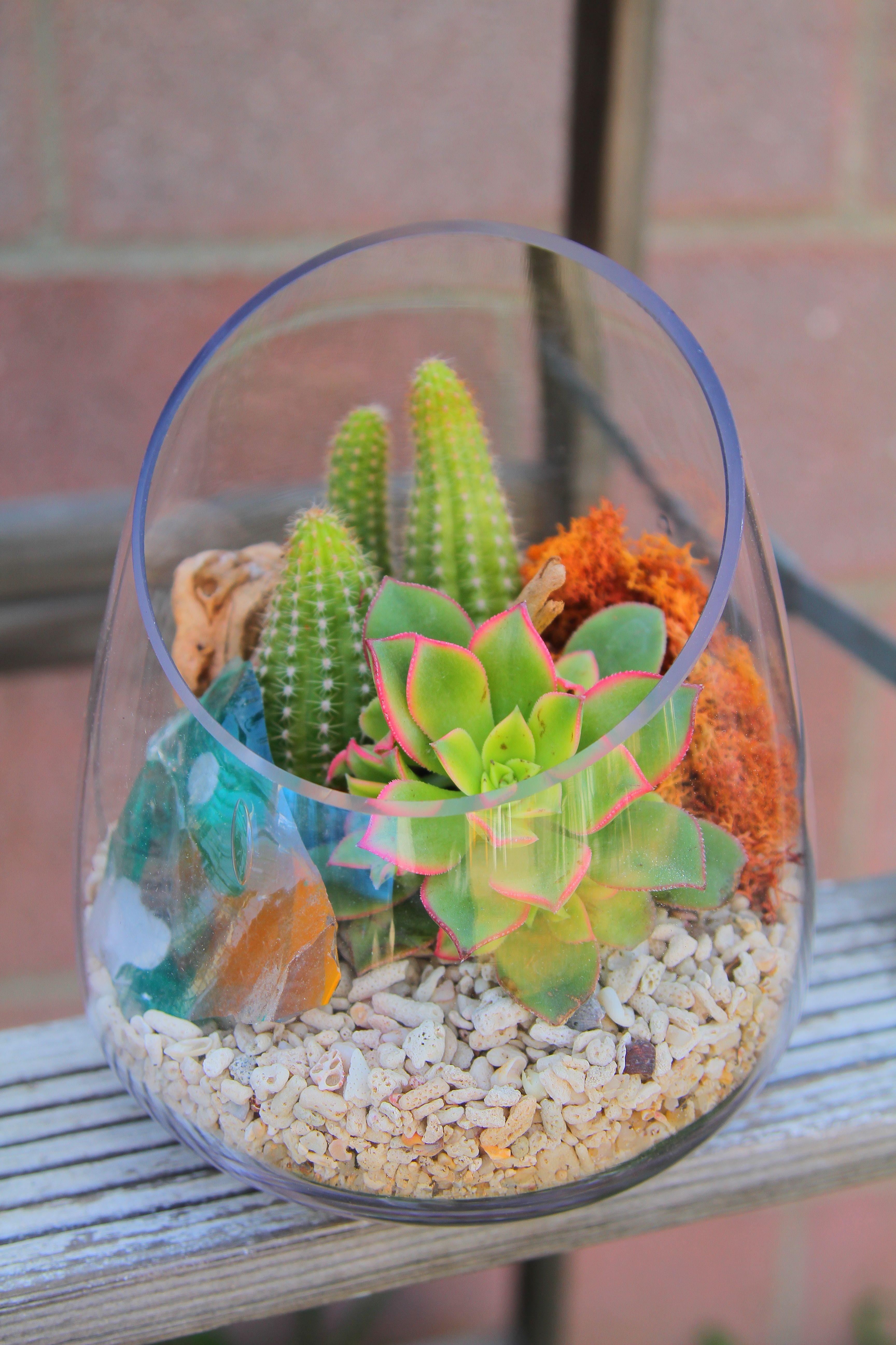 Mini Succulent Terrarium W Coral #Cactusterrarium