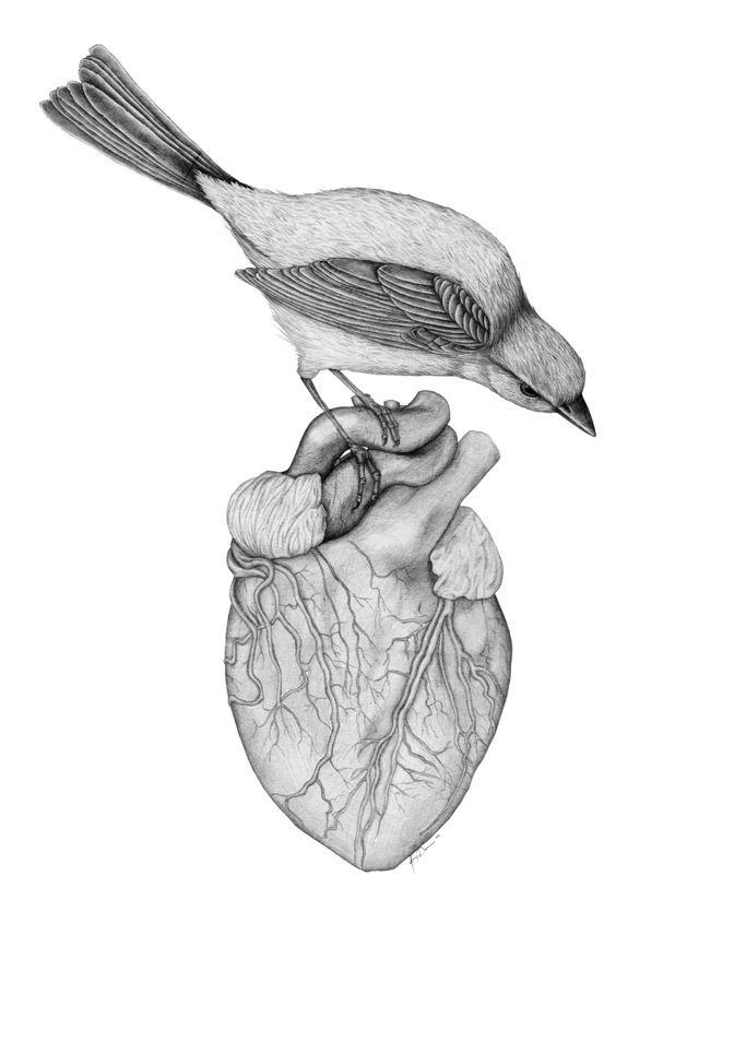 Stricken, Amy Dover #anatomy #heart #bird #illustration | Anatomical ...