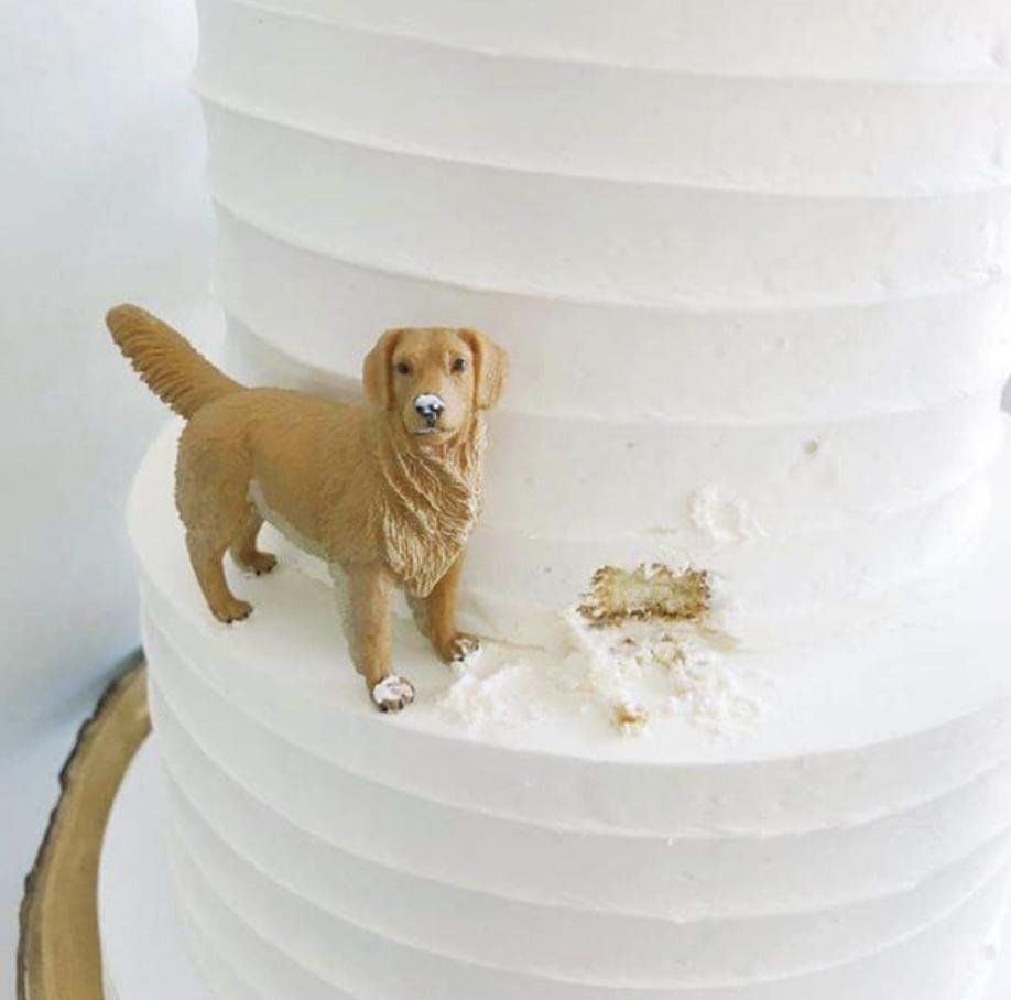 Golden Retriever Eating A Cake Hahaha Wedding Cakes Dog Themed Wedding Cakes Golden Retriever Cake