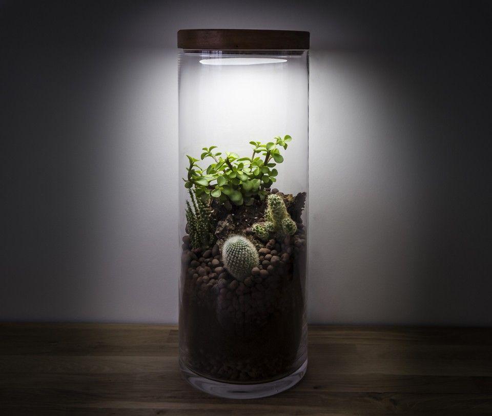 ecoterra terrarium lampe d int rieur par l atelier flavien davin en 2018 design pinterest. Black Bedroom Furniture Sets. Home Design Ideas
