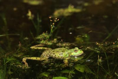 How to Keep Frogs Away From Your House | Frog, Tree frogs ...