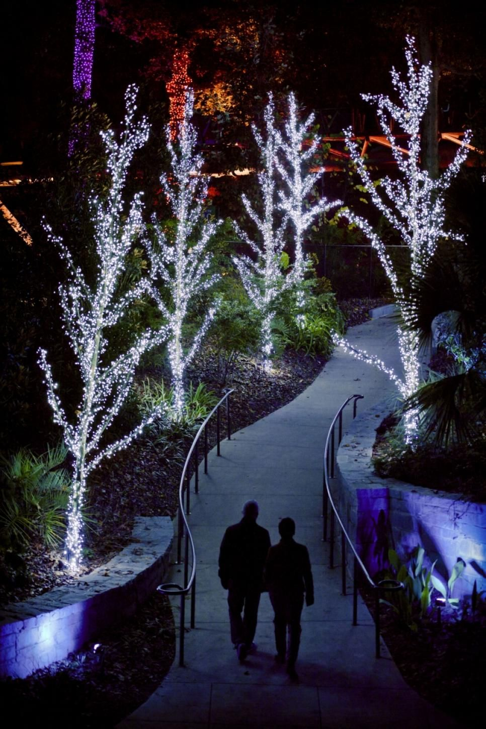 Holiday Light Shows at Botanical Gardens (With images