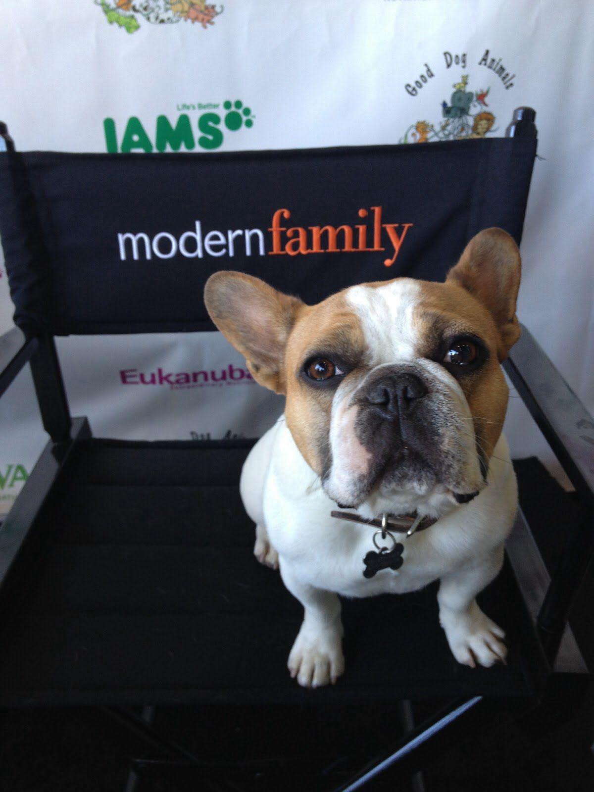 Stella (Modern Family) | FRENCH BULLDOGS | Pinterest | Modern family ...