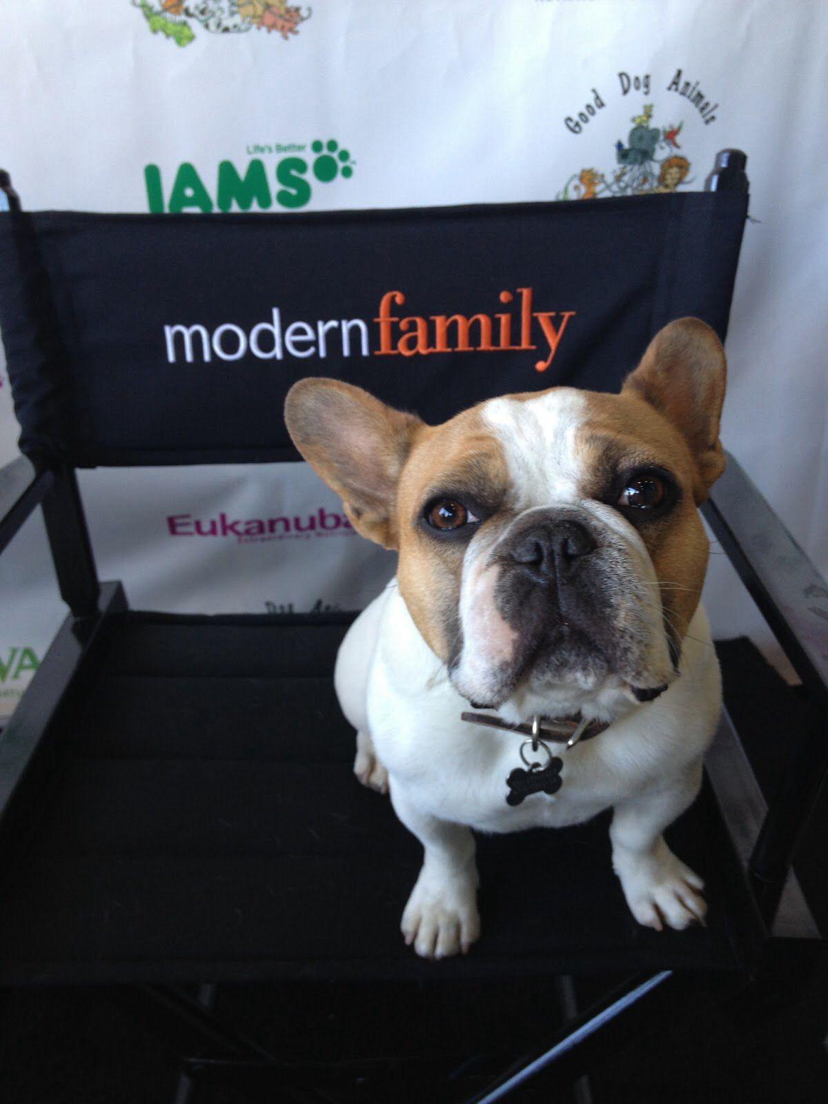 Stella Modern Family Bulldog What Kind Of Dog Modern Family