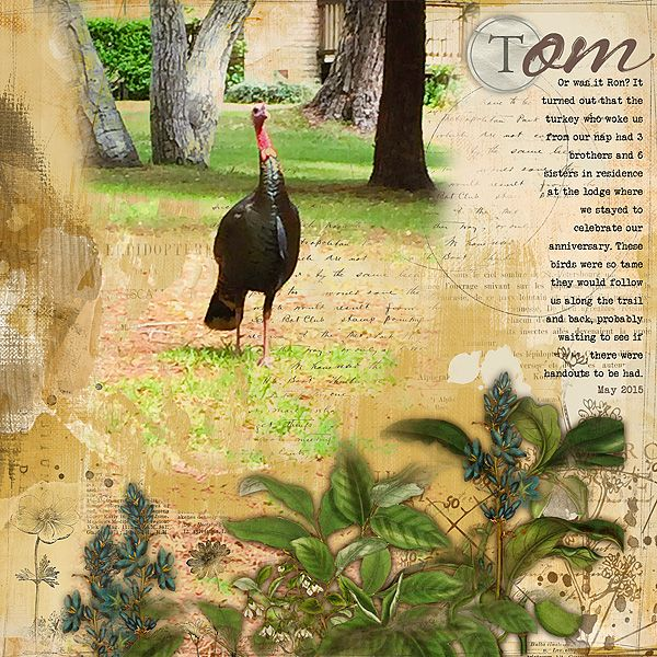 Tom_the_turkey