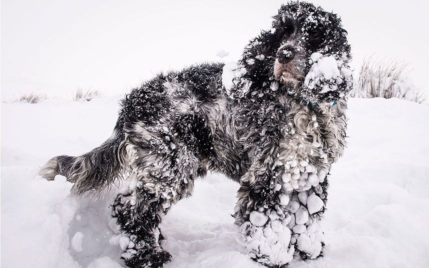 Image result for january snow dog