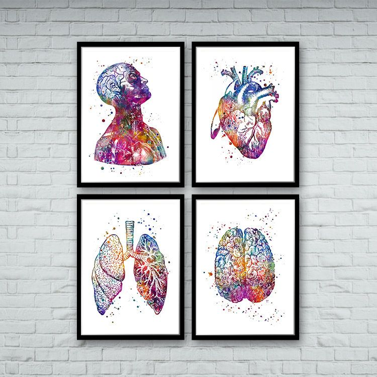 Anatomy Art DEALS Set of Prints Human Heart Brain Lungs Watercolor Wall Art for Doctor Office Decor Medical art