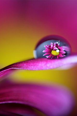 Purple Flower Water Drop Flowers Photography Wallpaper