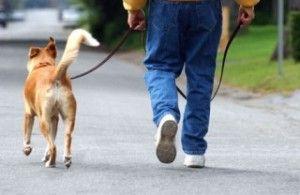 Cómo pasear a tu perro de forma correcta