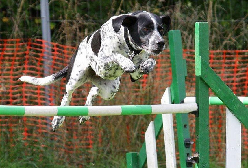 Dog Agility Training Dog Training Obedience Agility Training