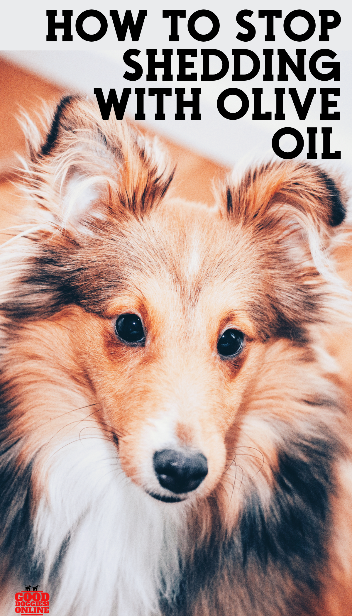 How To Stop A Dog From Shedding Using Olive Oil Dogs Pets Dog