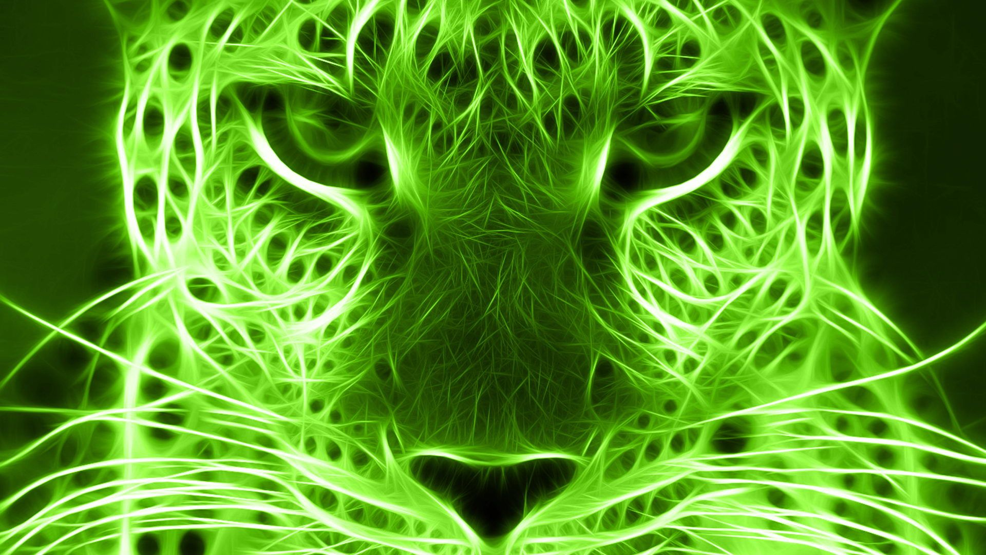 Cool Cat Lime Green Wallpaper Green Animals Green Pictures