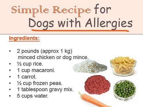 Dog Food Recipe Infobarrel Images Dog Food Allergies Dog Food