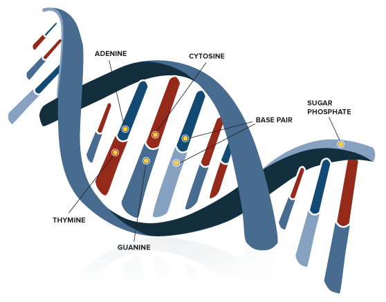Genetics Overview Science Behind The Genographic Project