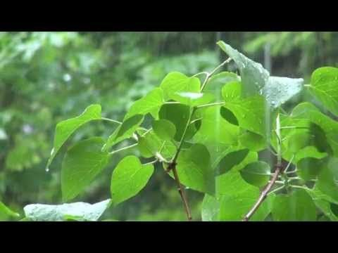 Tropical Rain Video 11 Hours - Rain Sounds and Video - Pure Nature - Bird Sounds - YouTube