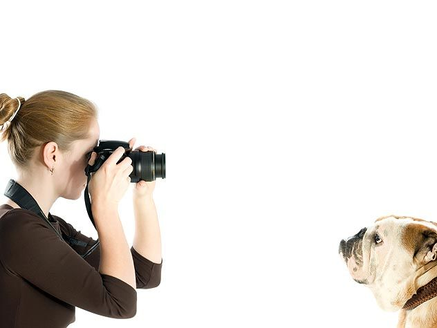 How Photography Can Save Pets Lives Animal Shelter Pets