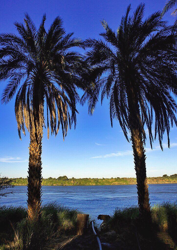 Palm Trees On Nile River Banks Soleb Northern Sudan أشجار النخيل علي ضفاف النيل سولب شمال السودان By Eric La Nile River River Bank The Beautiful Country