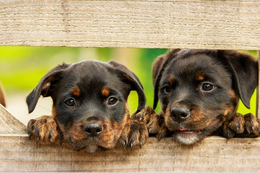 Puppy Costs How Much Does It Cost To Own A Puppy Buying The
