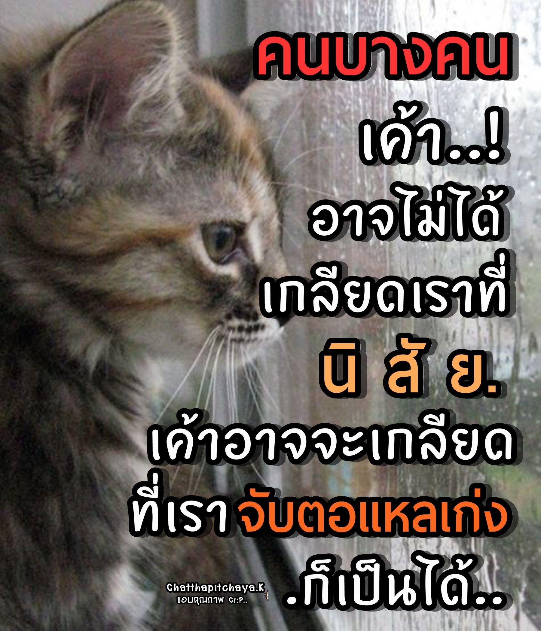 ป กพ นโดย Itsayakorn Mangkronnoppharat ใน คำคมช ว ต คำคมประจำว น คำคมตลก คำคม