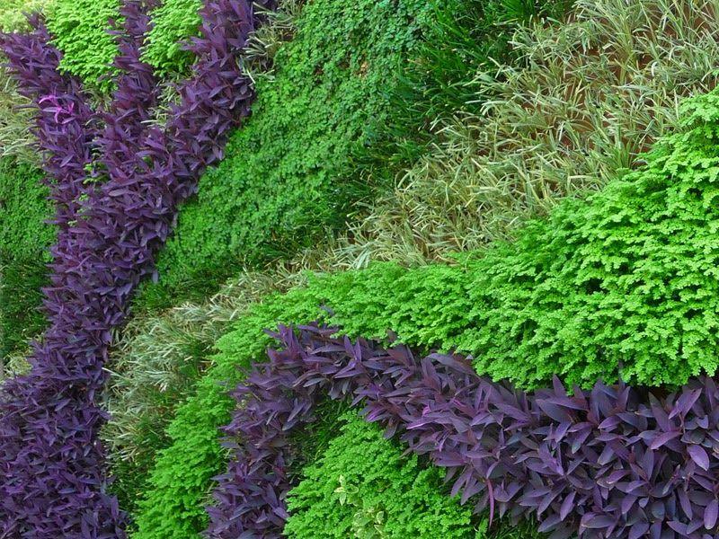 Dise o de jardines verticales muro verde curvo spring for Jardines verticales construccion