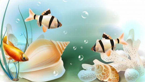 Fish High Resolution Wallpapers Hd Fish Wallpaper Hd Wallpaper Tank Wallpaper
