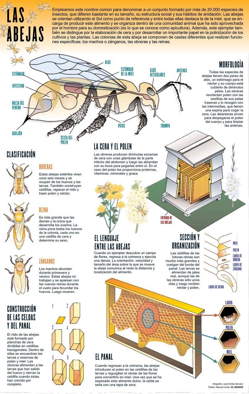 INFOGRAFÍA DE LAS ABEJAS - COMPUTER GRAPHICS OF BEES. | ¿Eres un ...
