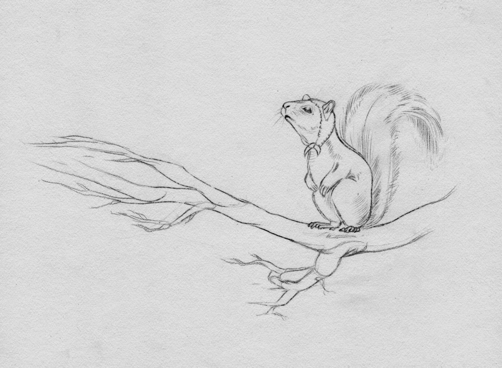 Shadiah Sketches: Squirrel For Magic Cabin Cartoon Sketchesmagazine  Editorialhow To Draweditorial Designsquirrelsvirginiacabinwatercolorsfairies