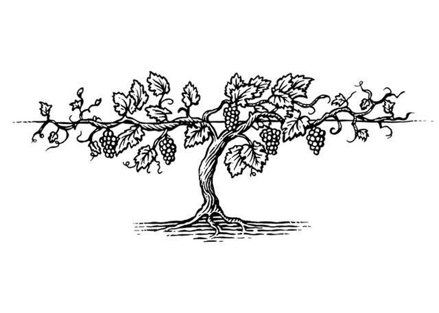 Vine Drawing, Vine Tattoos, Wine Vine