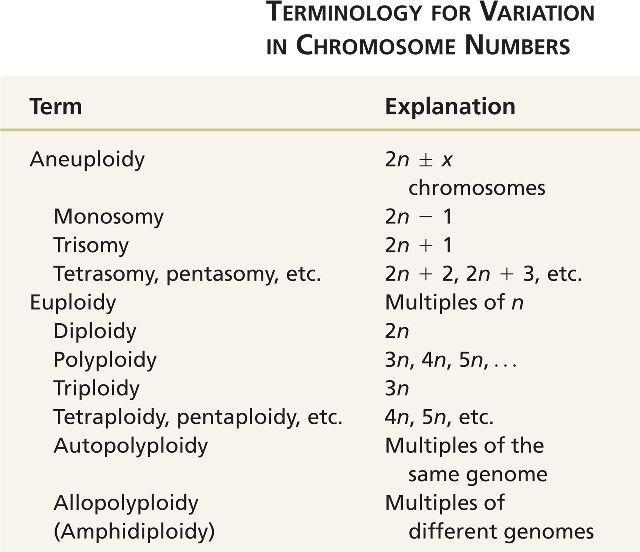 Aneuploidy Teaching Biology X Chromosome Teaching