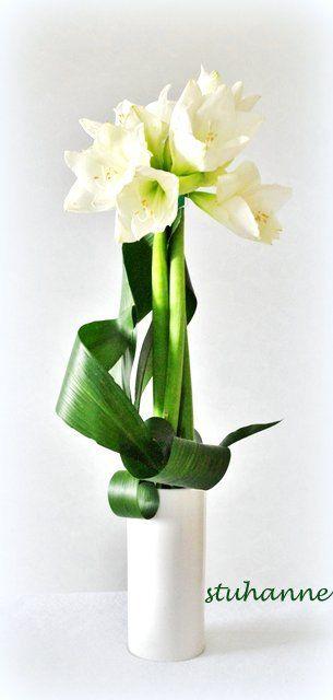 Amaryllis pinteres for Amaryllis fleurs