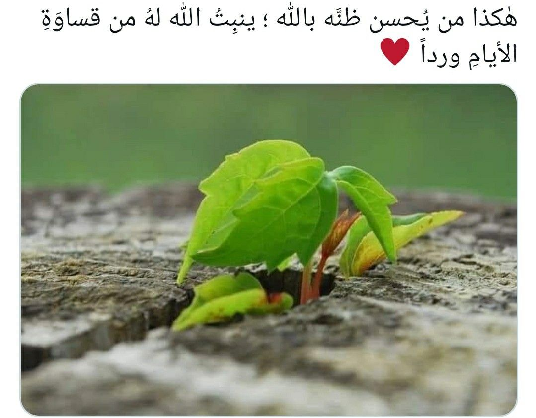 Pin By ريتاج وعبد سعدي On الي الله Strong Quotes Stay Strong Quotes Stay Strong