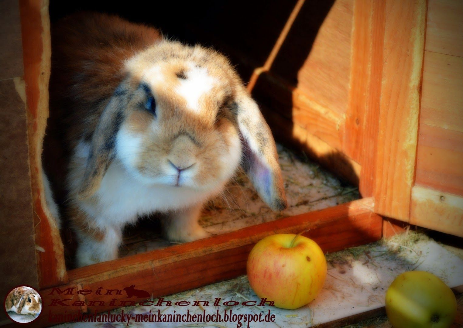 Bella Rabbit Hello Mia How Was Your Day Mit Bildern Kaninchen