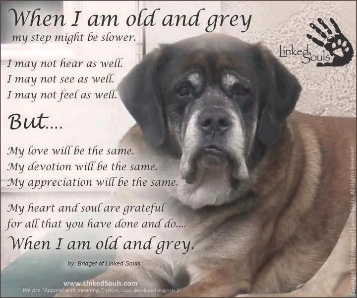 Senior Dogs Have The Most Beautiful Frosted Faces Dogs Dog Quotes