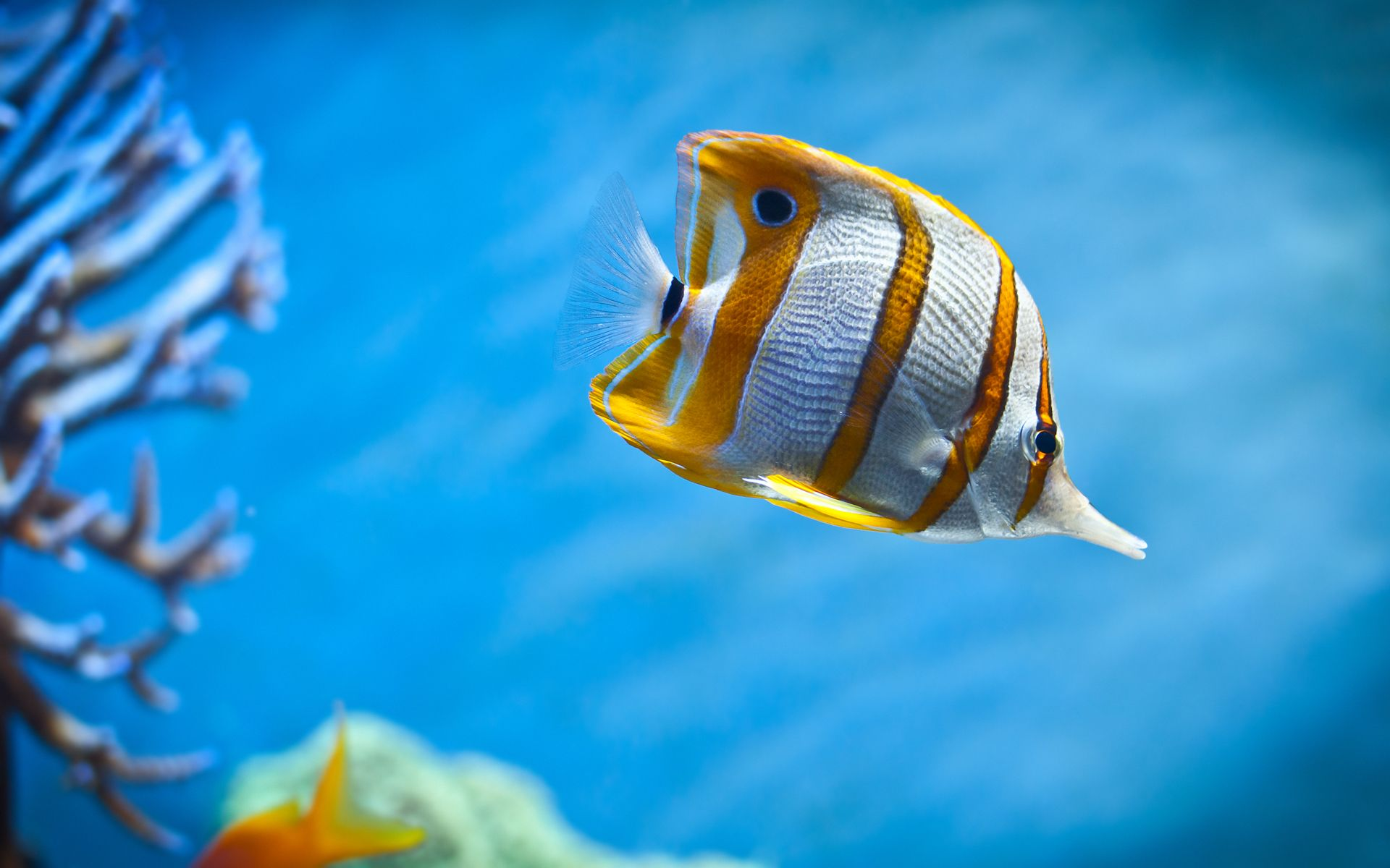 Colorful Fishes In The Sea Wallpaper Of Colorful Butterfly Fish Swimming In The Sea Click To Fish Wallpaper Underwater Animals Tropical Fish Aquarium