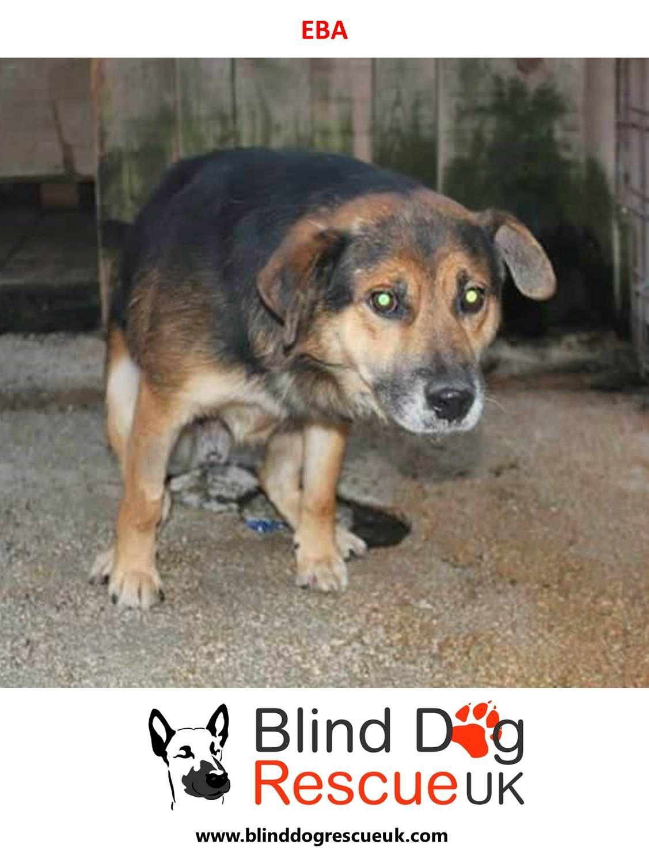 Adopt A Blind Dog With Images Dog Rescue Uk Blind Dog Dogs