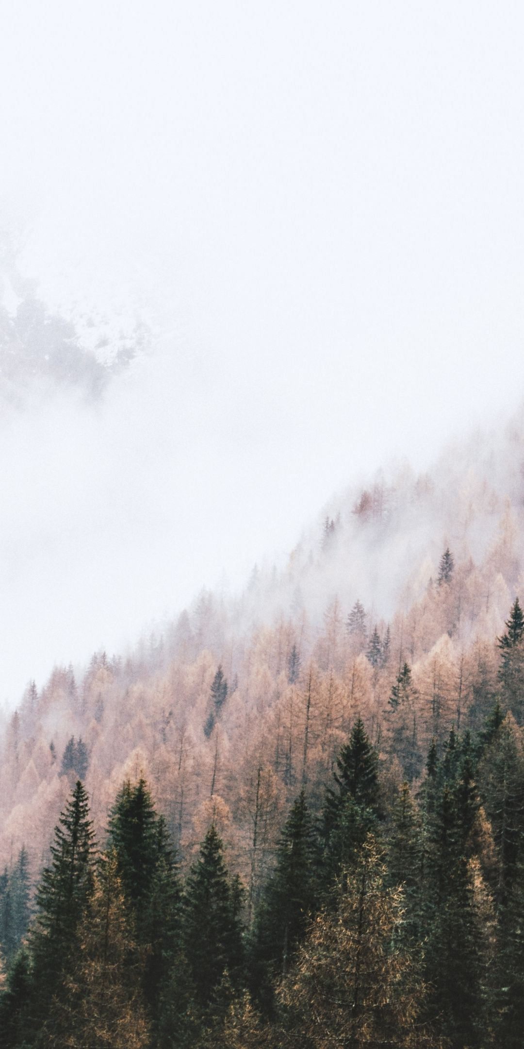 Autumn Peak Of Trees Pine Trees Mist 1080x2160 Wallpaper