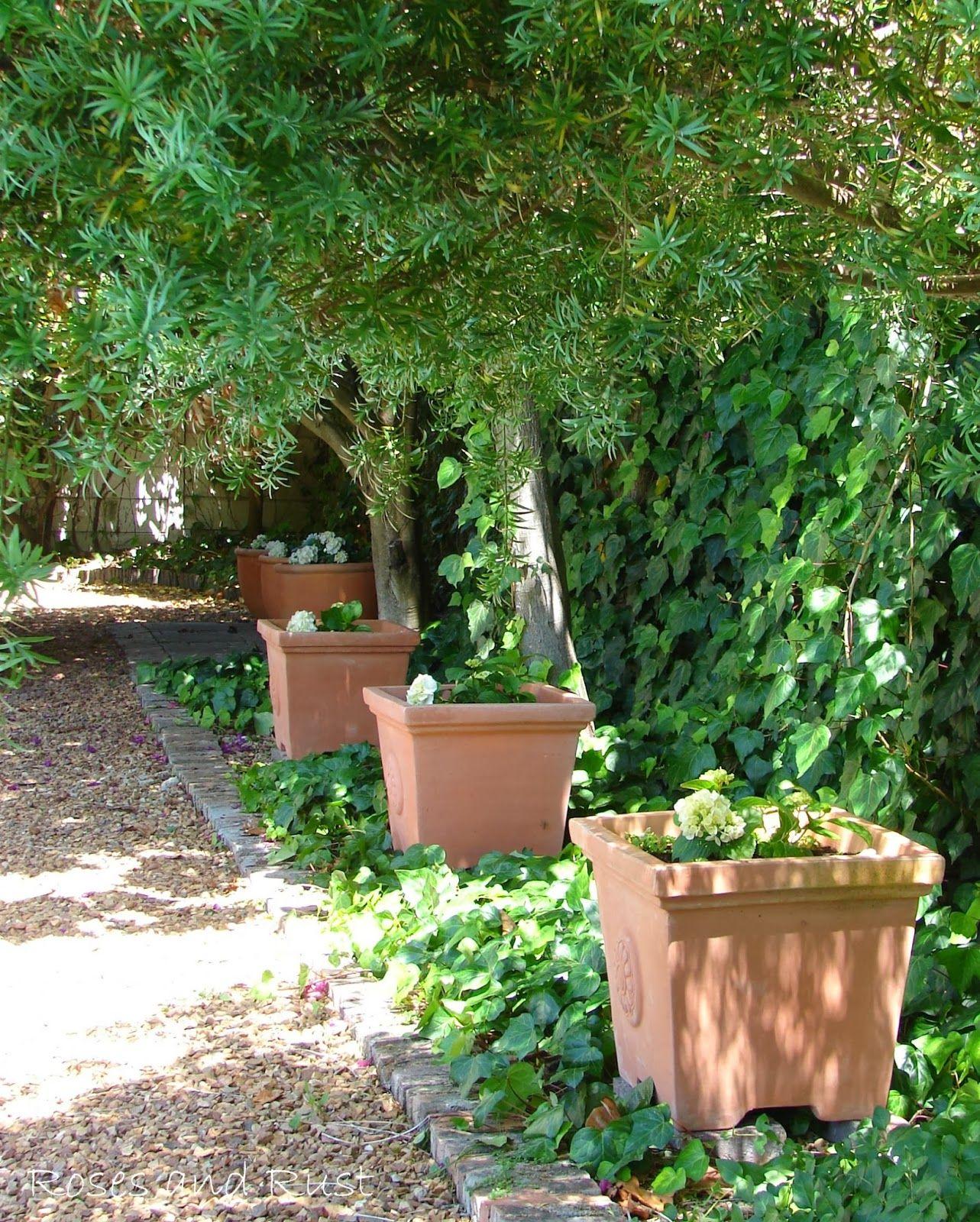 Landscape flower garden  Roses and Rust The Aestheteus Alphabet  I is for Ivy  Gardens
