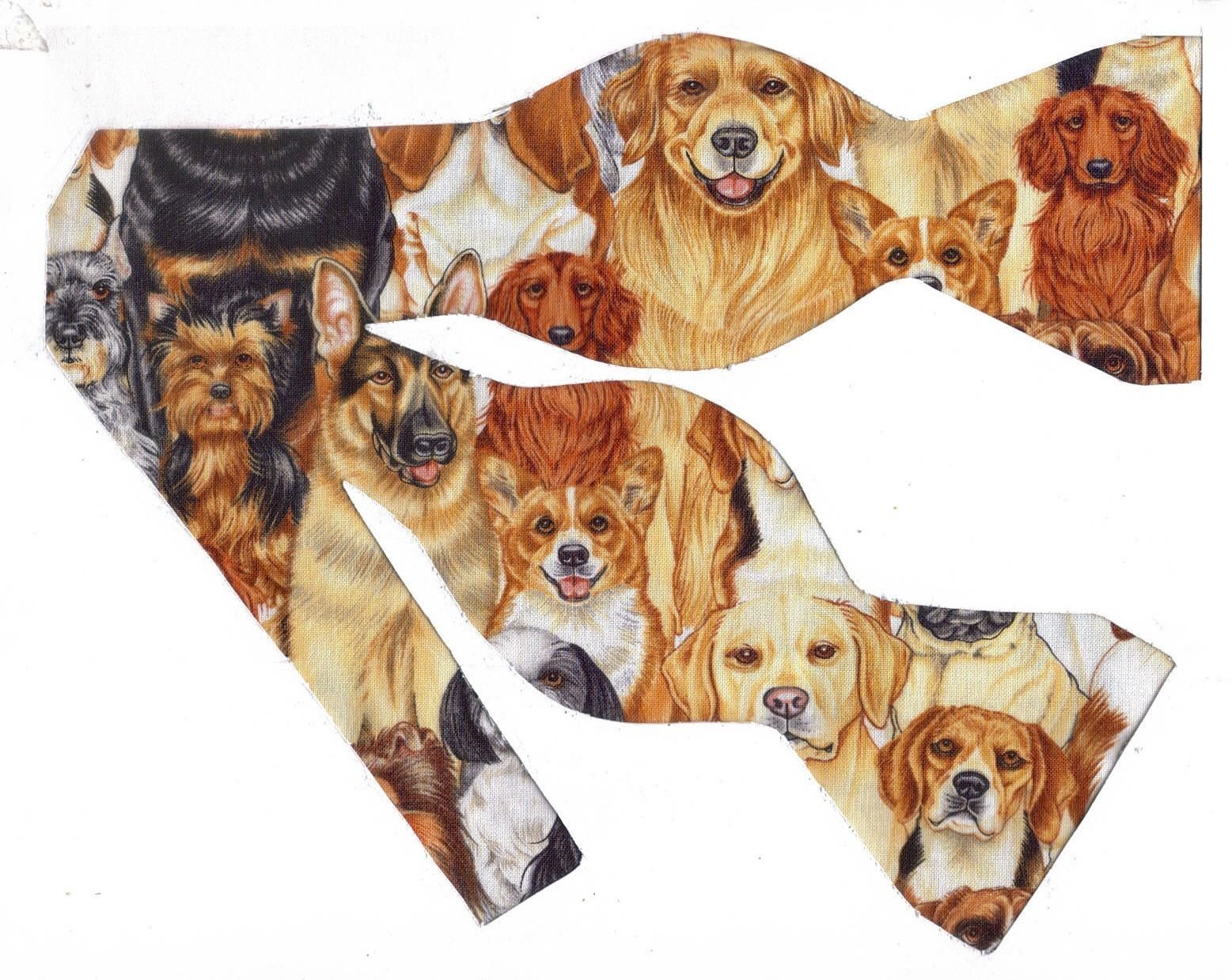Wonderful Bow Tie Bow Adorable Dog - bd55f54e97787c09b96a540f2a205038  Picture_282791  .jpg