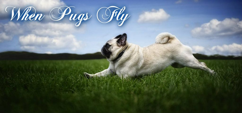 Pug Facebook Cover Photo For Your Timeline Pug Quotes When Pugs