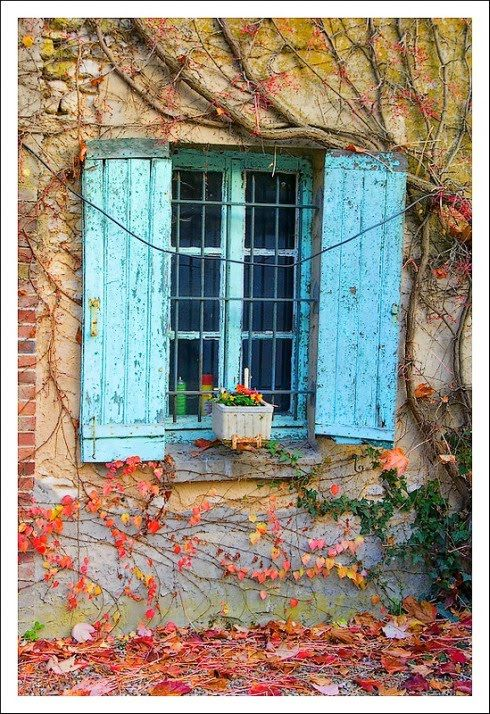 Blue Shutters with Fall Foliage | Content in a Cottage