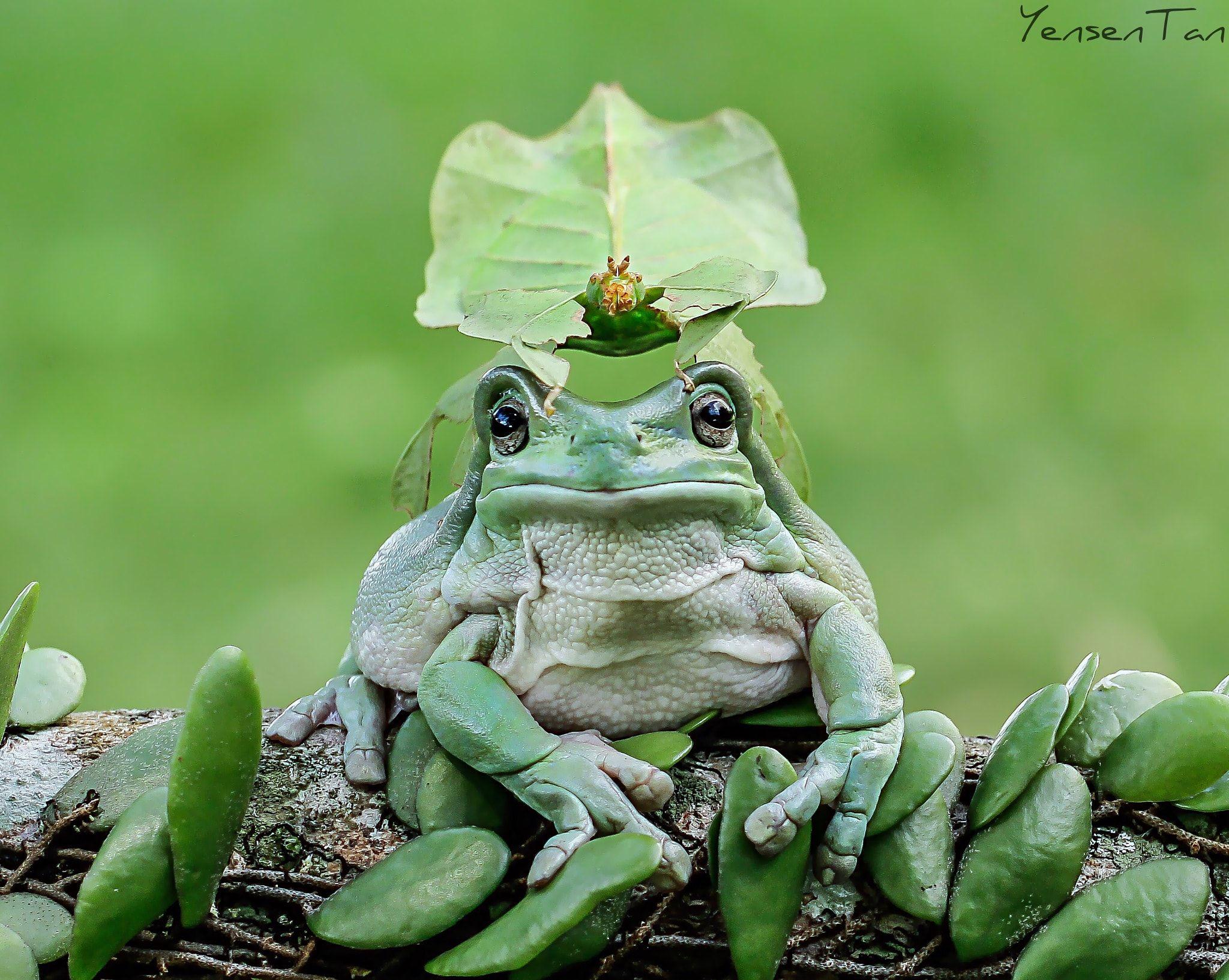 Green Frog Rain Hat New
