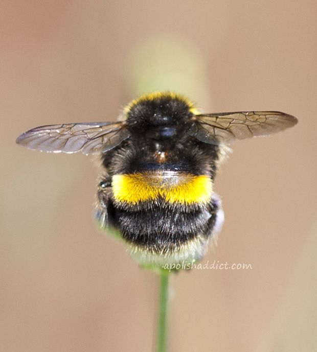 Cute Little Bumblebee Bum