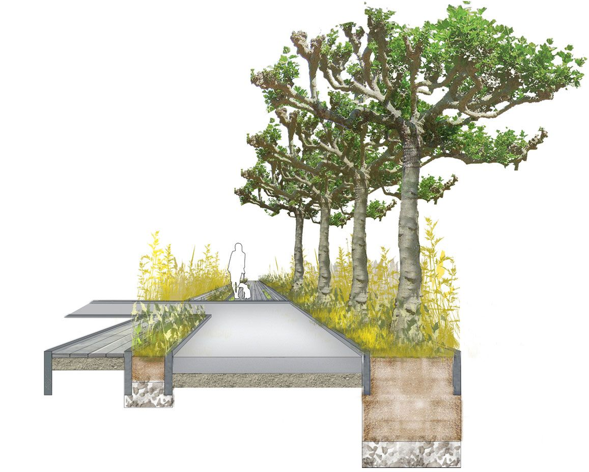 tree planting section architectural drawing  Projects to