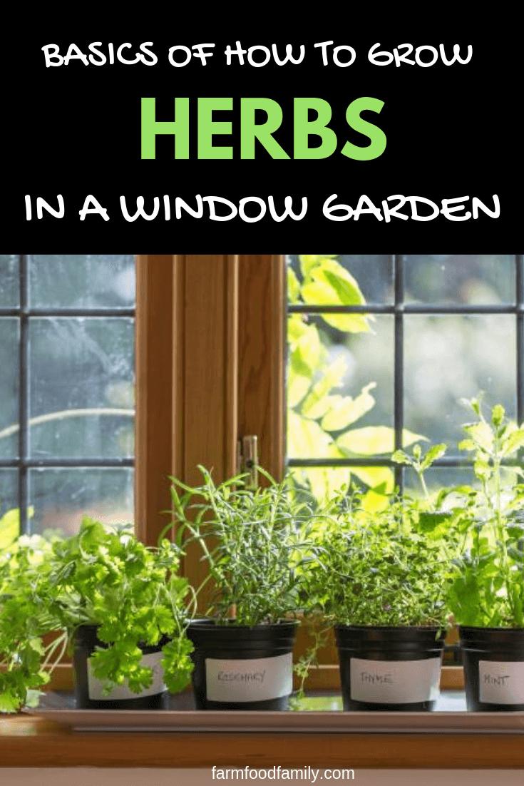 Indoor Herb Garden Basics Of How To Grow Herbs In A Window Garden