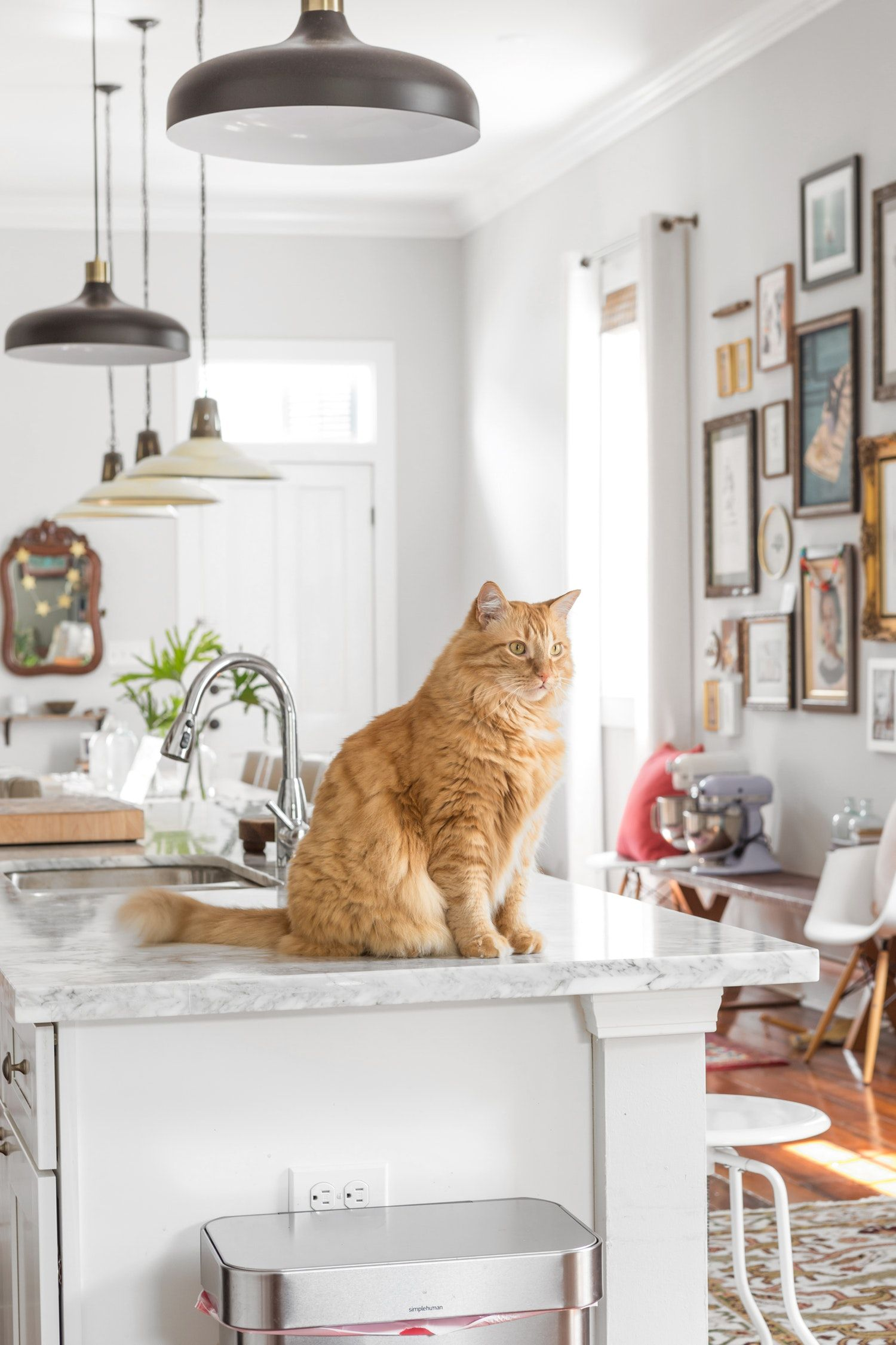 how to keep cat off countertops