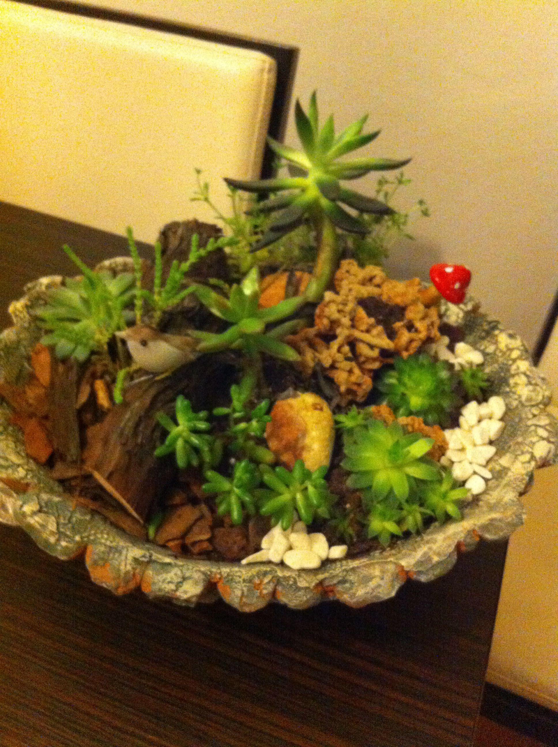 #arzu çiçek #sukulent #minyatürbahçem #succulent #garden #desing #Art #home #naturel #teraryum