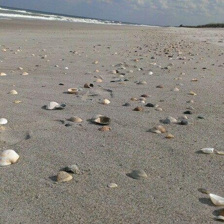 Shell Hash Cocoa Beach Sea Shells And Fossils Cocoa Beach Beach Sea Shells